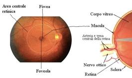 esame-fondo-oculare